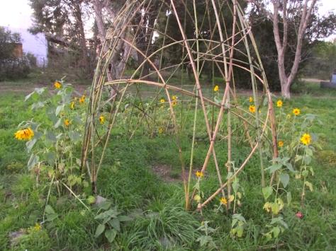 ecodomo quinta escencia mayo con flores - 14 toq small