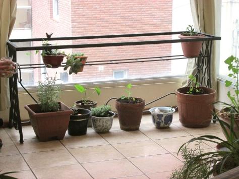 permacultura para deptos - 11 mayo 2014 - 28 small
