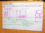 Estudiando el principio #10 de David Holmgren: Usar y Valorar la Diversidad. Acá en el dibujo estamos hablando sobre distantes etapas de sucesión biologica, cada una con sus propias carateristicas de diversidad.