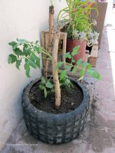 macetas de cubiertas soluciones practicas tomates 42 - small