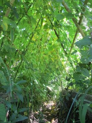 febrero - la quinta estructura cultivable 1