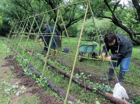 permacultura la quinta estructura noviembre 9 - 33 - small
