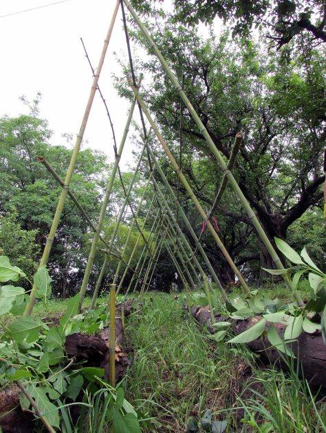 permacultura la quinta estructura noviembre 9 - 43 - small