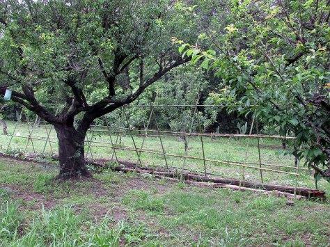 permacultura la quinta estructura noviembre 9 - 49 - small