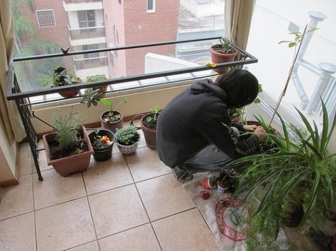 permacultura para deptos huerta living