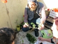 04 - * permacultura para deptos junio 29 2014 - barrio juniors casa de silvina - 35 - small