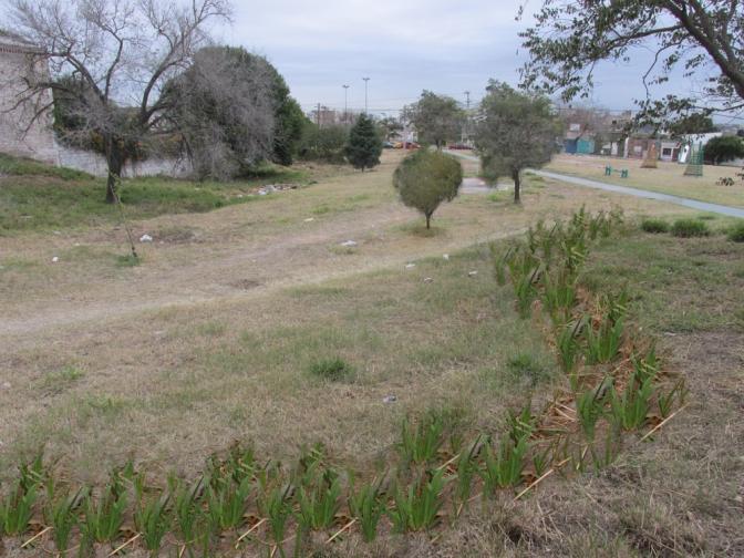 Diseños para el proyecto de Bosque Comestible en Parque Sur San Vicente