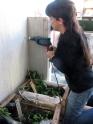 permacultura para deptos 1 junio 2014 - balcon de ale - 26 - small