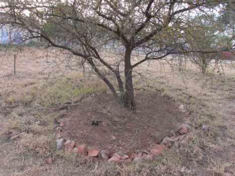 tree-compostera-Parque-Sur-Sanvicente-Julio-28-2014---01