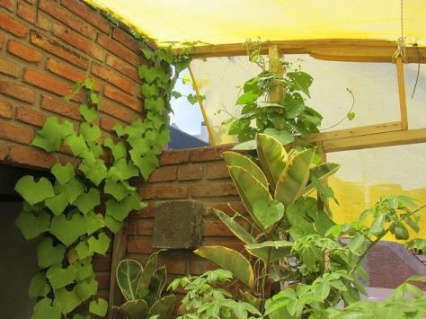 balcon casa del arbol 02