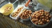 nisperos cosecha no 1 2 small crop