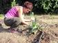 PDC cuarto encuentro 23 de agosto 2014 quinta esencia bosque comestible - 94 - small