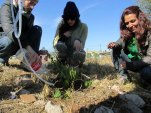 PDC segundo encuentro permacultura parque sur san vicente Julio 26 2014 - 17 - SMALL