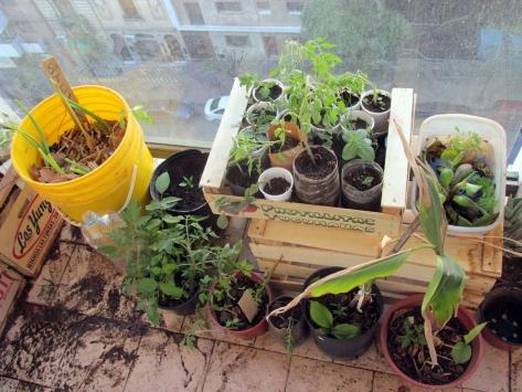 permacultura para deptos ale nueva cordoba 7 de septiembre 2014 - 96 - small