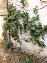 batata en la pared casa huerta agosto 25 2014 - 01 small