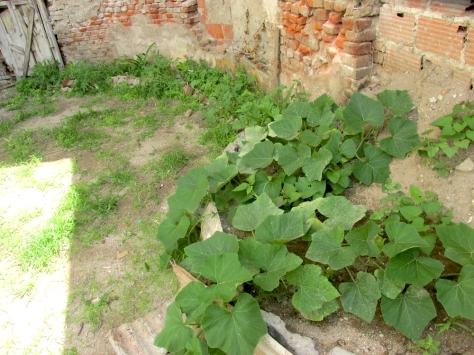casa de pepino patio zapallo canteros 22 de enero 2015 02 paisaje small
