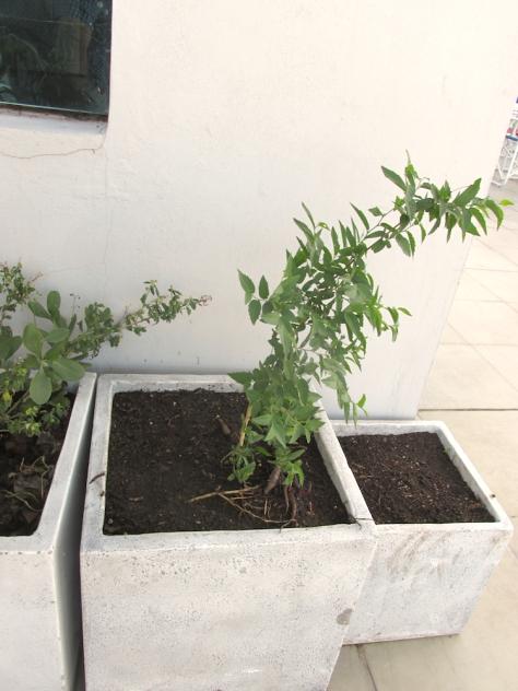 coworking cor 28 de enero 2015 - compost terraza 08 tala arbol small